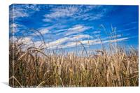 Wheatfields, Canvas Print
