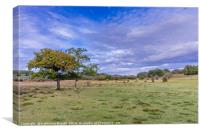 New Forest National Park, UK, Canvas Print