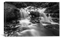 Talybont Forest, Canvas Print