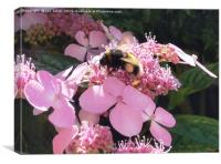 Bumble Bee on flower, Canvas Print