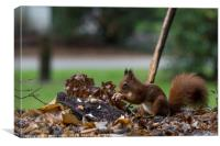 red squirrel looking for seeds and other foods and, Canvas Print