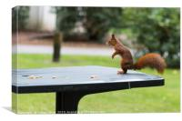 red squirrel in the garden, Canvas Print