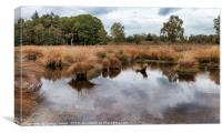 national park de sprengen in holland, Canvas Print