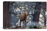 Young stag in winter, Canvas Print
