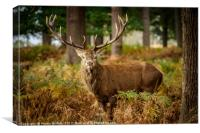 Stag in Autumn Woodland, Canvas Print