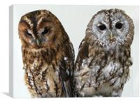 Two Owls, Canvas Print
