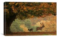 Stag and Doe in Autumn, Canvas Print