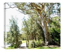 Magnifient Gum Tree, Murrays Beach., Canvas Print