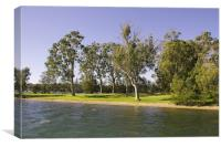 Waterfront park with Gum Trees, Canvas Print