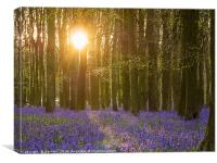 Sunshine in the Bluebell Wood, Canvas Print
