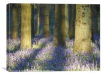 Shadows in the Bluebells, Canvas Print