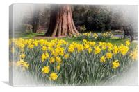 Daffodils and a Park Bench, Canvas Print