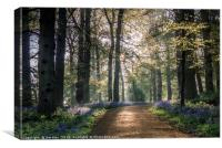 A Footpath through the Bluebell Wood, Canvas Print