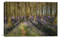 Walk through the Bluebells, Canvas Print