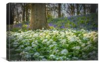 Wild Garlic in a Bluebell Wood, Canvas Print