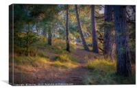 Pinewoods on the Beach, Canvas Print