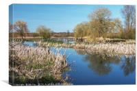 The River Wensum in Spring, Canvas Print