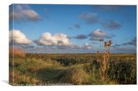 Copper Teasel on Salthouse Marsh, Canvas Print