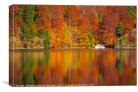 Autumn forest reflected in the Alpsee lake , Canvas Print