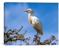 Cattle egret on a tree, Canvas Print