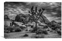 Joshua Tree National Monument, Canvas Print