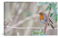 Robin in a Tree at Ninesprings Yeovil, Canvas Print