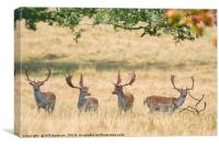 Fallow Bucks Under The Trees, Canvas Print