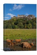 Coo's Under the Castle, Canvas Print