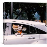 Cute dog on open window of a car, Canvas Print