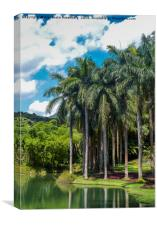 Giant Palm trees in Brazil, Canvas Print