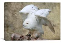 Snowy Owl ready for flight, Canvas Print