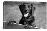 Flat coated retriever, Canvas Print