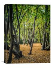 Epping Forest in Spring, Canvas Print