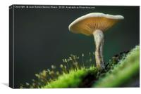 Small mushroom seen from below, Canvas Print