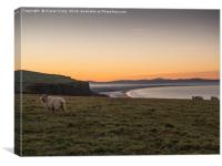 Sheep enjoying the sunset , Canvas Print