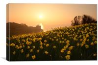 Daffodils of Sidmouth, Canvas Print
