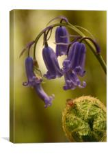 In a Bluebell Wood, Canvas Print