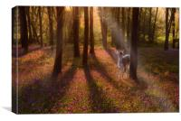 Secrets of a Bluebell Wood, Canvas Print