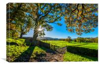 Farm Gate in the Yorkshire Dales at Sunrise, Canvas Print