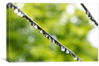 Drops on the wire by Clive Wells, Canvas Print