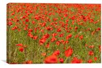 A Spread of Poppies, Canvas Print
