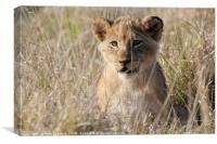 Lion Cub, Canvas Print