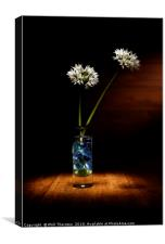 Wild Garlic flower, Canvas Print