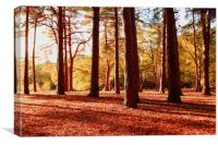 Tree sunset landscape in woodland late autumn, Canvas Print