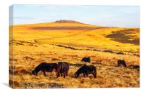 Dartmoor ponies and Higher White Tor, Canvas Print