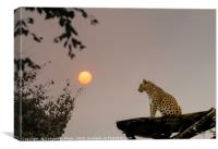 North Chinese Leopard and sun setting, Canvas Print