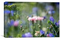 Pink flower in the meadow, Canvas Print