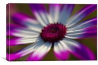 Morning Glory Flower, Canvas Print