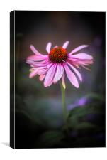 Withering Beauty, Canvas Print