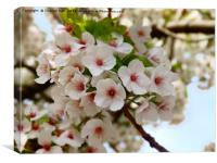 Blooming Cherry Blossom Tree Framed Photo , Canvas Print